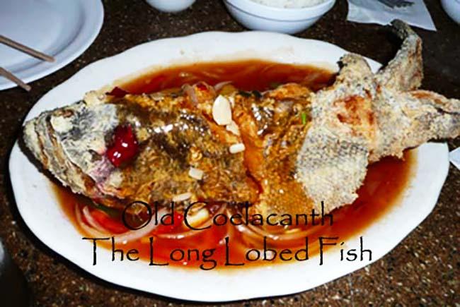 Long Lobed Fin Fish